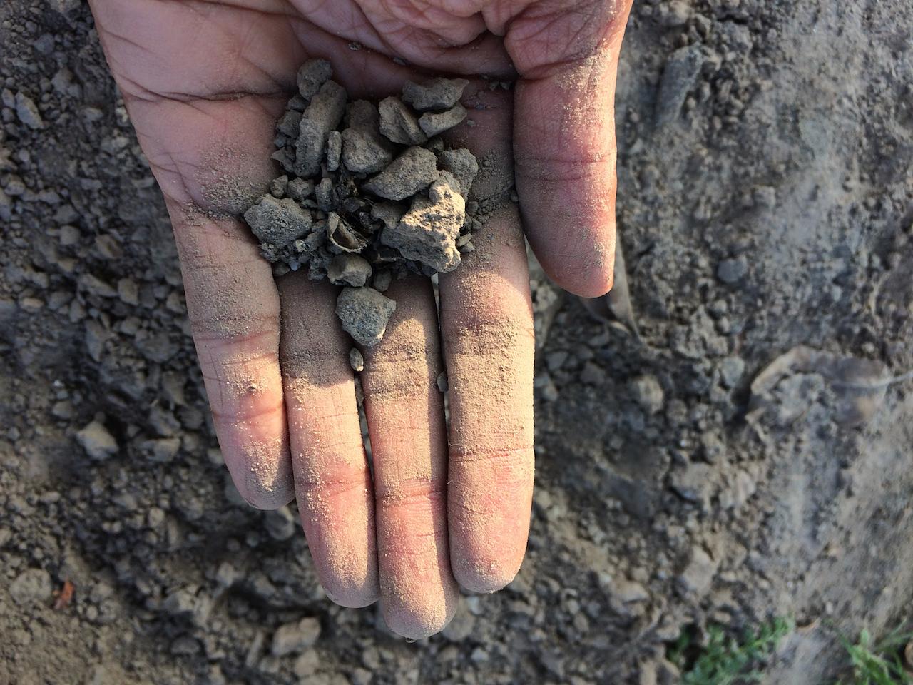 The soil of Baba Nanak's field - pic. Gurmeet Kaur Feb 2018
